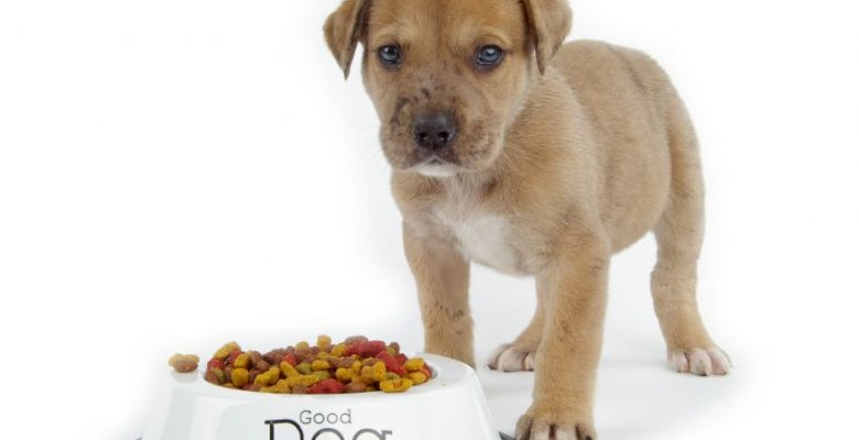 Beslenme İçeriklerine Göre Köpek Mama Ürünleri