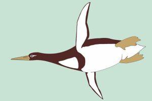 Yeni Zelanda'da 'Canavar kuş' fosili bulundu