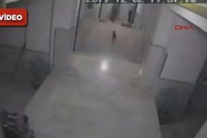 Bu kez Ankara: Kediye vahşice saldırdı