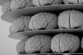 Daha büyük beyin boyutuna sahip hayvanlar daha akıllı