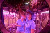 Çin gönüllüleri, sanal üs tabanına 200 gün harcıyor