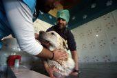 İstanbul'da Hayvan Kaplıcalarına Yoğun Talep