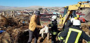 Konya'da ağılın çatısı çöktü, 112 küçükbaş hayvan altında kaldı